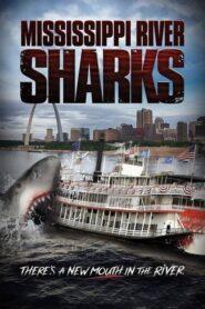 Mississippi River Sharks